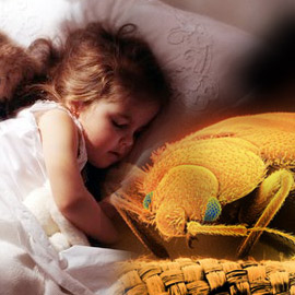 Bed Bugs Doral